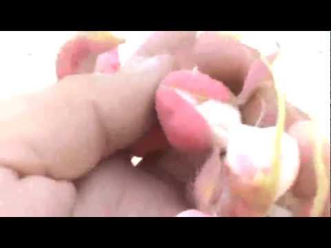 Guamuchiles en Culiacan Sinaloa CAMPAMENTO ACAXEES - YouTube  Guamuchiles