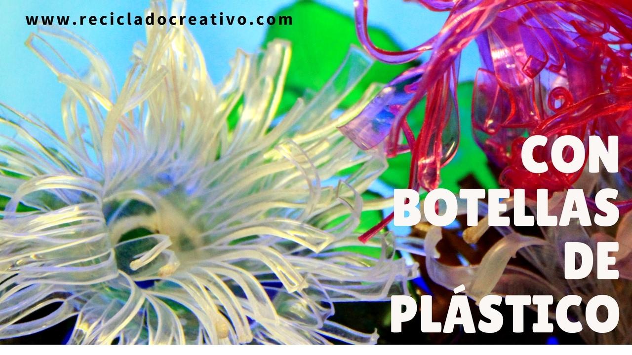 Flores ortigas y an monas del mar con botellas de for Cocinar ortigas de mar