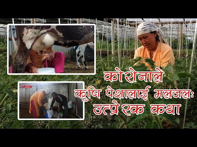 कोरोनाले कृषि पेशालाई मलजल : उत्प्रेरक कथा । koinch chuplu Episode 69