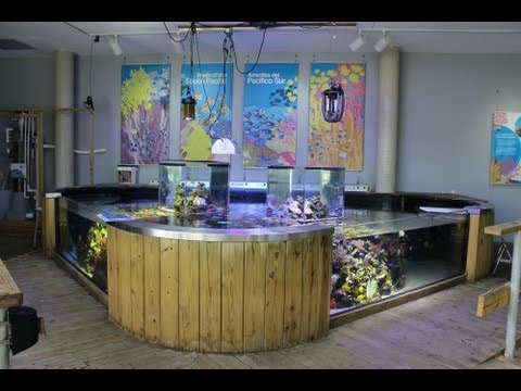 Ocean View Aquariums - Miami, FL [Local Fish Store Travel Ep. 6]