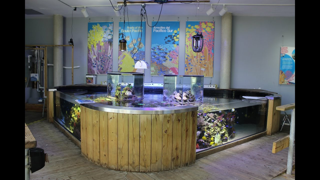 Ocean view aquariums miami fl local fish store travel for Fish store miami