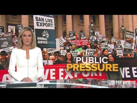 Nine + Seven News. Cruelty For Islam, Yes or No?(Live Exports)(Fake Religion)