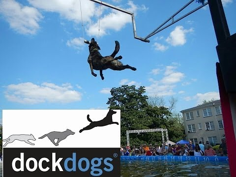 Perry Dogwood Festival  DockDogs Competition