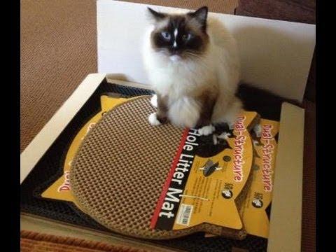 Ragdoll Cats Receive Moonshuttle Blackhole Cat Litter Mats for ...