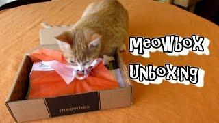 meowbox Unboxing - Cat Subscription Box - November 2015 thumbnail