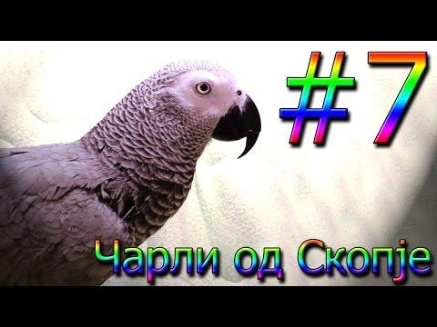 Чарли од Скопје / Charli od Skopje #7 [Charlie: African Grey Talking Parrot]