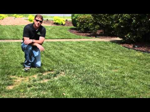 Landscape tips | Bare spots | Fort Payne, AL to Chattanooga, TN