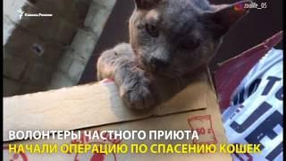 50 рублей за убитую кошку, или Как зооактивисты спасали животных в Дагестане