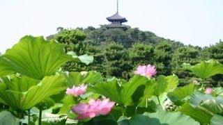 Sankei-en - Japanese Garden, Yokohama ● 三渓園 根岸横浜