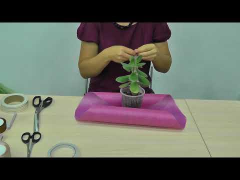 Как упаковать комнатное растение в подарок. Вариант 1