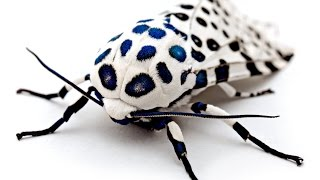 THE MOST RARE INSECT WORLD PART 1