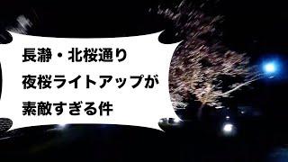 長瀞サクラ|アムスハウス &フレンズ