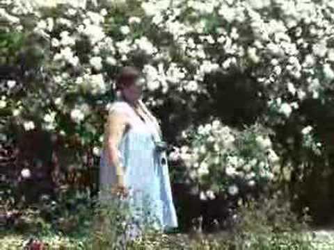 Te Awamutu Rose Garden