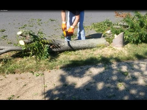 Worx Electric Chainsaw Demo and review