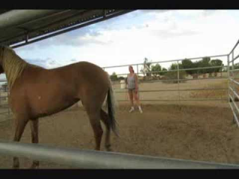 Malibu -BLM Mustang - Day 7 - Training Day 6