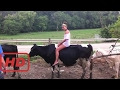 Funny Machine  World Amazing Modern Sexy Girls Women Riding on Cows and Pigs Fun Epic Fail Top 10