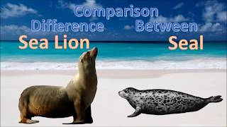 Difference between Seal and Sea Lion | Sea lion vs Seal Comparison