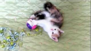 в Минске трио котят  - в свой дом хотят!  :)