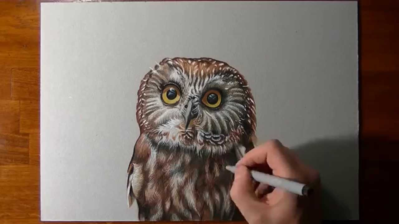 how to draw a hawk step by step for kids