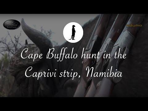 Best Cape Buffalo hunt in the Caprivi strip, Namibia