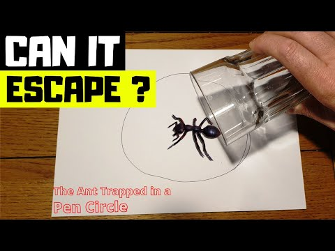 Can it Escape ? The Ant Trapped in Pen Circle
