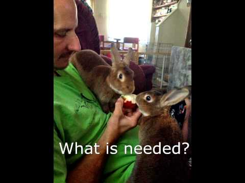 Foster A Bunny.
