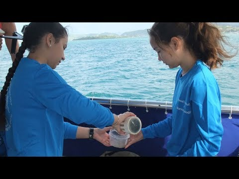 VOS5-5 Promo - Visiting the Hawai'i Institute of Marine Biology