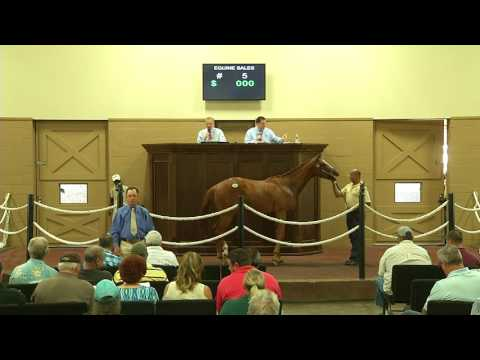 Equine Sales of Louisiana 2017 Sale of Two Year Old Horses - Auction