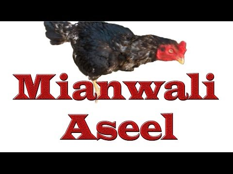 Mianwali Aseel