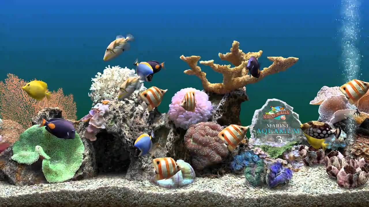 3d Fish Tank Wallpaper Marine Aquarium 3 Bildschirmschoner Perdiscovideo Youtube