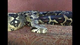 قصة هروب الثعابين مع جمال العمواسي