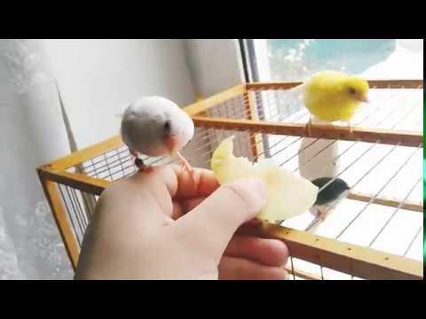 Вопрос: Как научить птицу садиться на палец?
