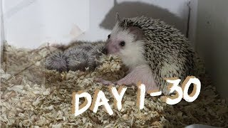 LULU AND HER FIVE HOGLETS