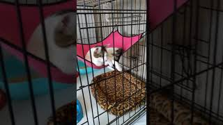 Кот в гамаке и пол носа белая, половина черная!
