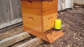 Beekeeping: Staining & Weatherproofing English Garden Beehives