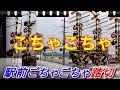 駅前ごちゃごちゃ踏切 伊予鉄道郡中線Railway crossing Iyo line(Ehime japan)
