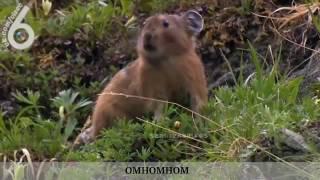 Смешные ролики про животных! Смотреть!