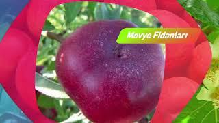 Gambar cover parlarfidan   meyve fidanları