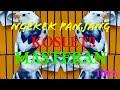 Suara Masteran Lovebird Ngekek Panjang Juara Nasional  Mp3 - Mp4 Download