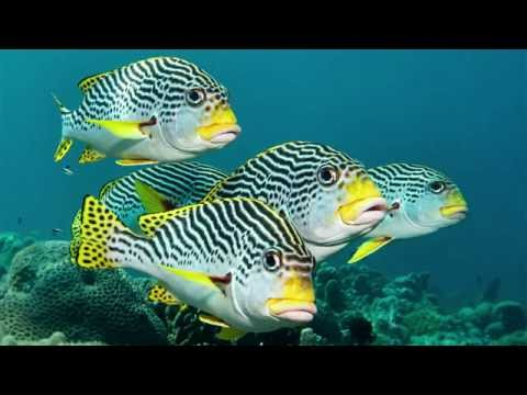 Video overview for Philippines scuba diving centre and dive shop
