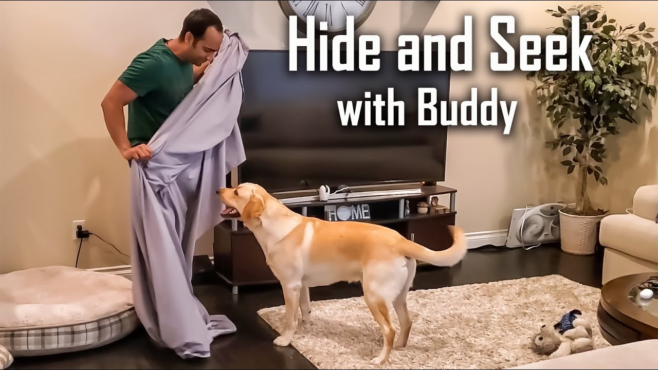 Hide and Seek with My Dog After Covering Him Under a Blanket | Funny Dog Video in Hindi