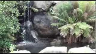 Botanic Gardens - Canberra 2013