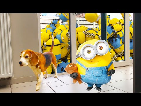 Dog Pranked By Turbo Dave The R/C Minion! Cute Beagle Marie