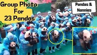 遊びたいさかりだから。去年の夏生まれた23頭の子パンダたちの記念撮影がフリーダムだった。