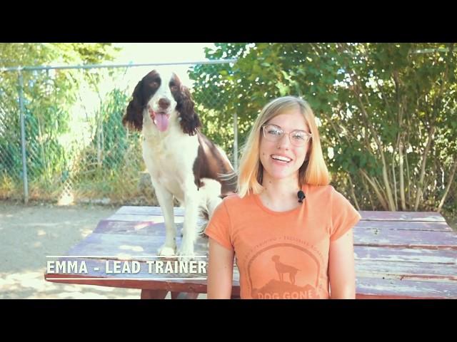 Meet Emma - Head Dog Trainer at Dog Gone Amazing