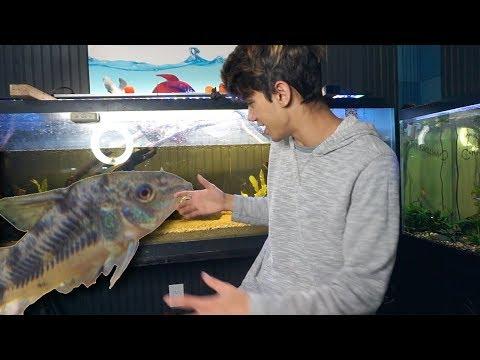 My CORY CatFish HAD BABIES!!