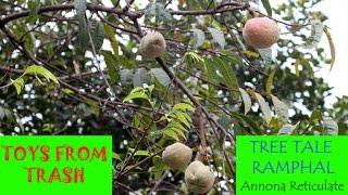 Tree Tale Ramphal | Hindi