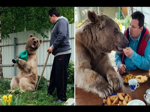 Family Live With BEAR Who Sits At Dinner Table In Russia