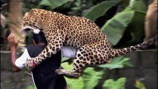 [Best Animal Fights]  [Wild Animal Attack]  16 Worst Animal Attacks