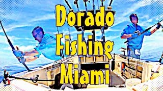 Insane Dorado Fishing in Miami HUGE SCHOOL!